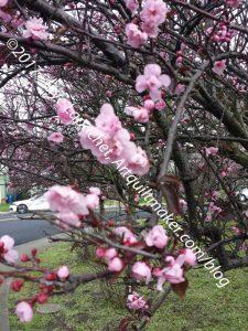 ColorPlay: Cherry Tree