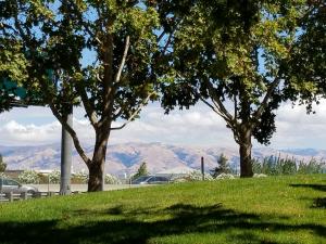 Freeway View