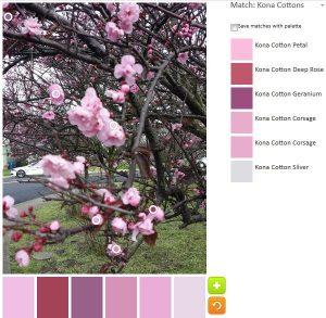 ColorPlay: CherryTree n.2