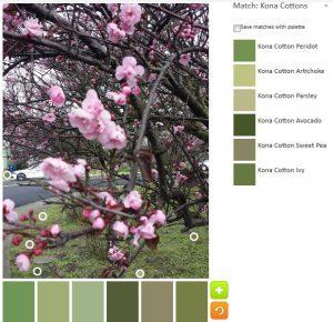 ColorPlay: CherryTree n.4