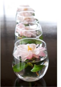 Camellias in glass and water (https://www.cathyhecknurseryart.com/blog/2011/03/the-bewildered-gardner-and-her-husband-on-camelias)