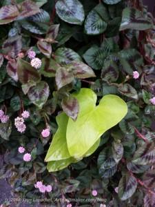 Sonoma Plants