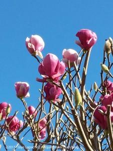 CQFA Challenge: Spring in Humboldt
