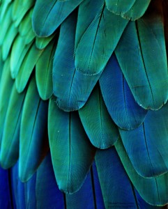 Macaw Feathers by Michael Fitzsimmons